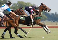 story-about-polo_hook