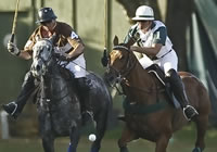 story-about-polo_line