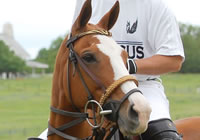 story-about-polo_ponies
